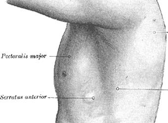 大胸筋と前頸筋